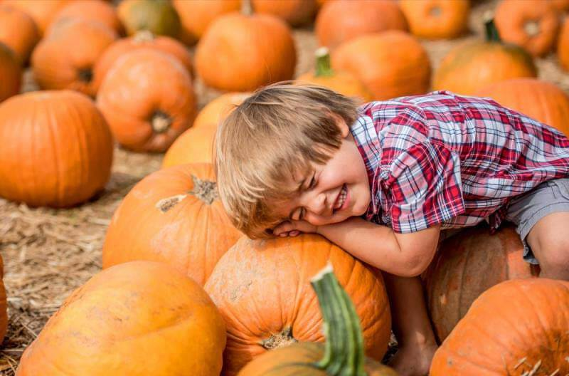 The Boone Hall Pumpkin Patch